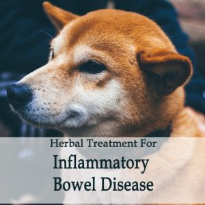 Irritable Bowel Syndrome, IBS, IBD in Dogs