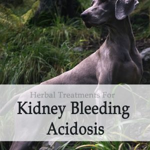 Herbal Treatment For Kidney Bleeding Acidosis in Dogs