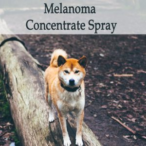 Herbal Treatment for Cancer - Melanoma Concentrate Spray for Dogs