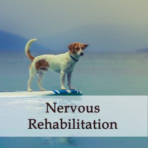 Herbal Treatment - Nervous Rehabilitation Tonic for Dogs