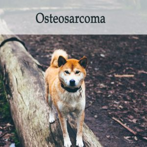Herbal Treatment for Cancer - Osteosarcoma in Dogs