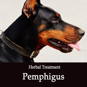 Pemphigus in Dogs