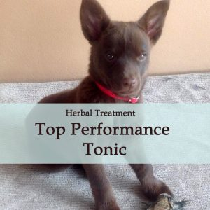 Top Performance Herbal Tonic for Dogs