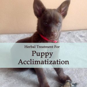 Herbal Treatment For Puppy Acclimatization