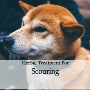 Scouring Herbal Tonic for Dogs