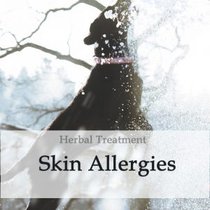 Herbal Treatment for Chronic Skin Allergies in Dogs