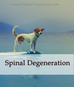 Herbal Treatment For Spinal Degeneration in Dogs