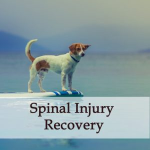 Herbal Treatment For Spinal Injury Recovery in Dogs