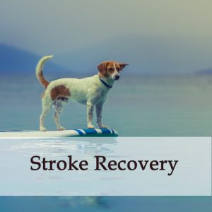 Herbal Treatment For Stroke Recovery in Dogs