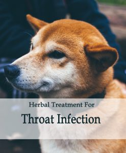 Herbal Treatment For Throat Infections in Dogs