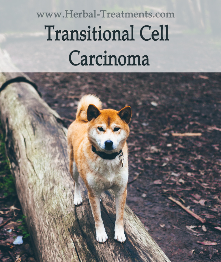 Herbal Treatment For Transitional Cell Carcinoma in Dogs