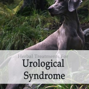 Herbal Treatment for Urological Syndrome in Dogs