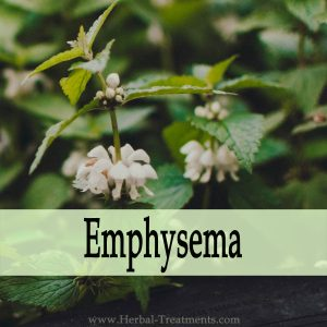 Herbal Medicine for Emphysema (Difficulty Breathing)