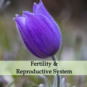 Herbal Treatments for Fertility and Reproductive Conditions