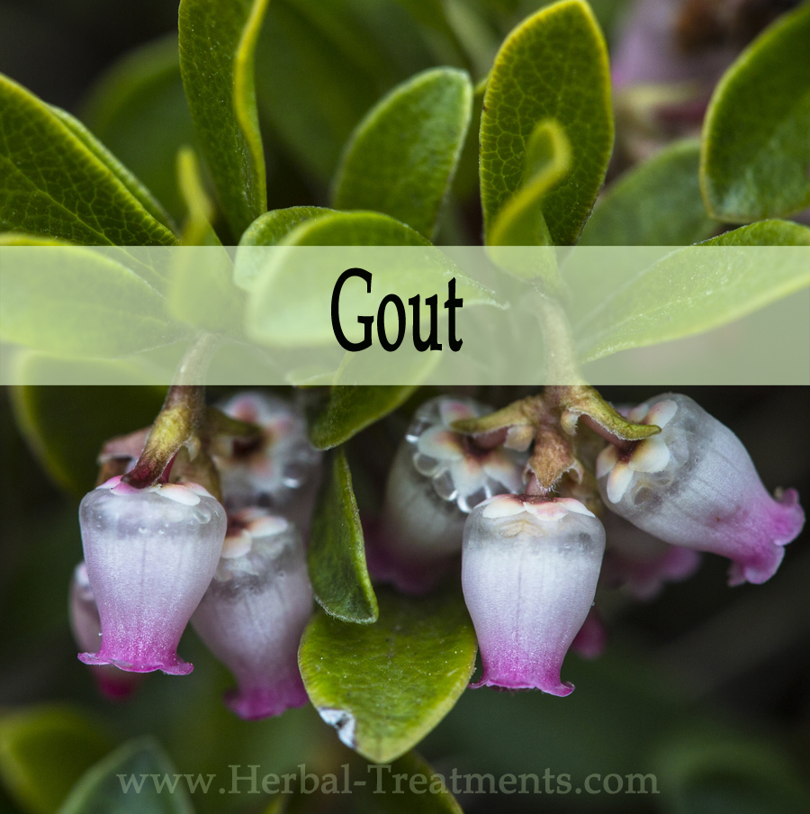 Herbal Medicine for Gout