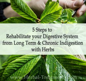 5 Steps to Rehabilitate your Digestive System from Long Term and Chronic Indigestion with Herbs