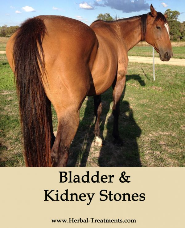 Herbal Treatment for Bladder and Kidney Stones in Horses