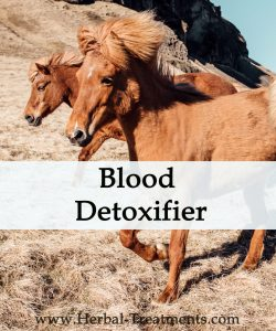Herbal Treatment - Blood Detoxifier for Horses