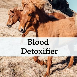 Herbal Treatment - Blood Detoxifier for Horses