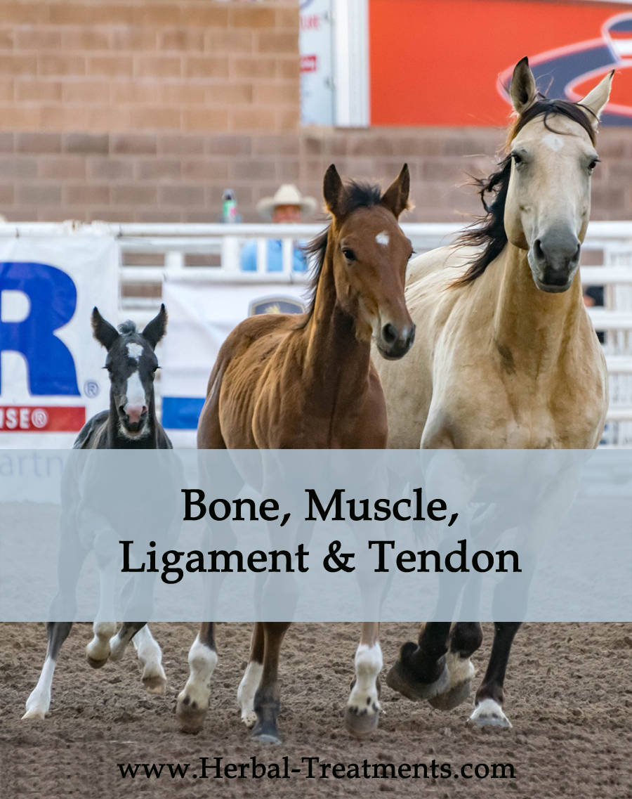 Herbal Treatments for Equine Bone, Ligament, Muscle Conditions