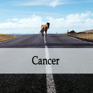 Herbal Treatments for Equine Cancer