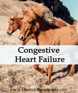 Herbal Treatment For Congestive Heart Failure in Horses (Diuretic Support)