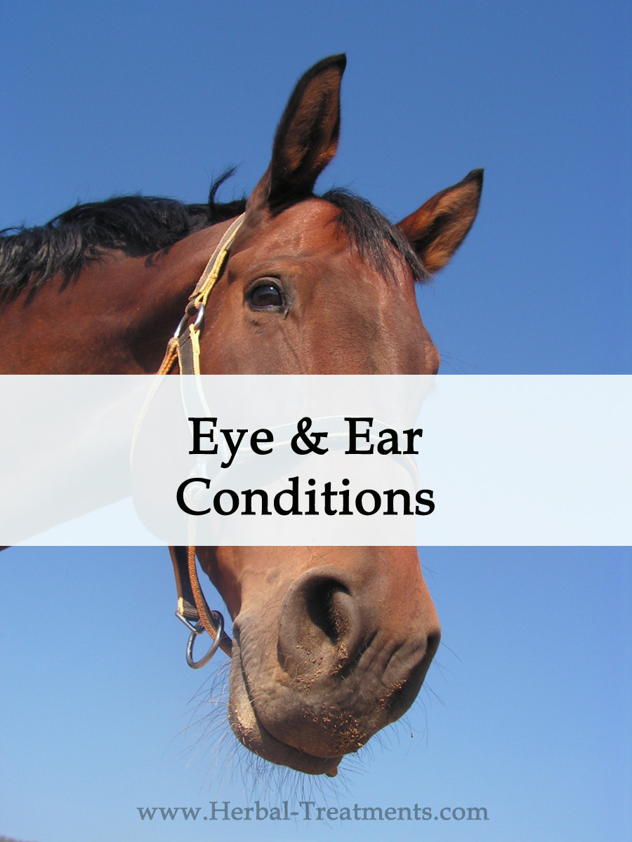 Herbal Treatments for Equine Eye and Ear Conditions