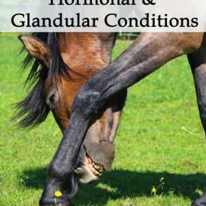 Herbal Treatments for Equine Hormonal and Glandular Conditions