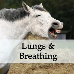Herbal Treatments for Equine Lung and Breathing Conditions