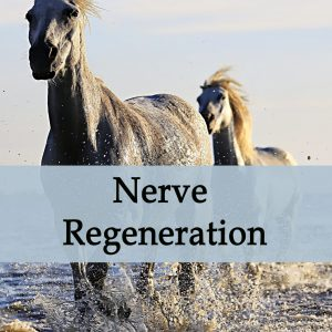 Herbal Treatment for Nerve Regeneration in Horses
