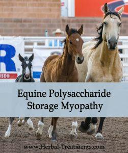 Herbal Treatment of PSSM, EPSM - Equine Polysaccharide Storage Myopathy in Horses