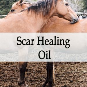 Herbal Treatment - Scar Healing Oil for Horses