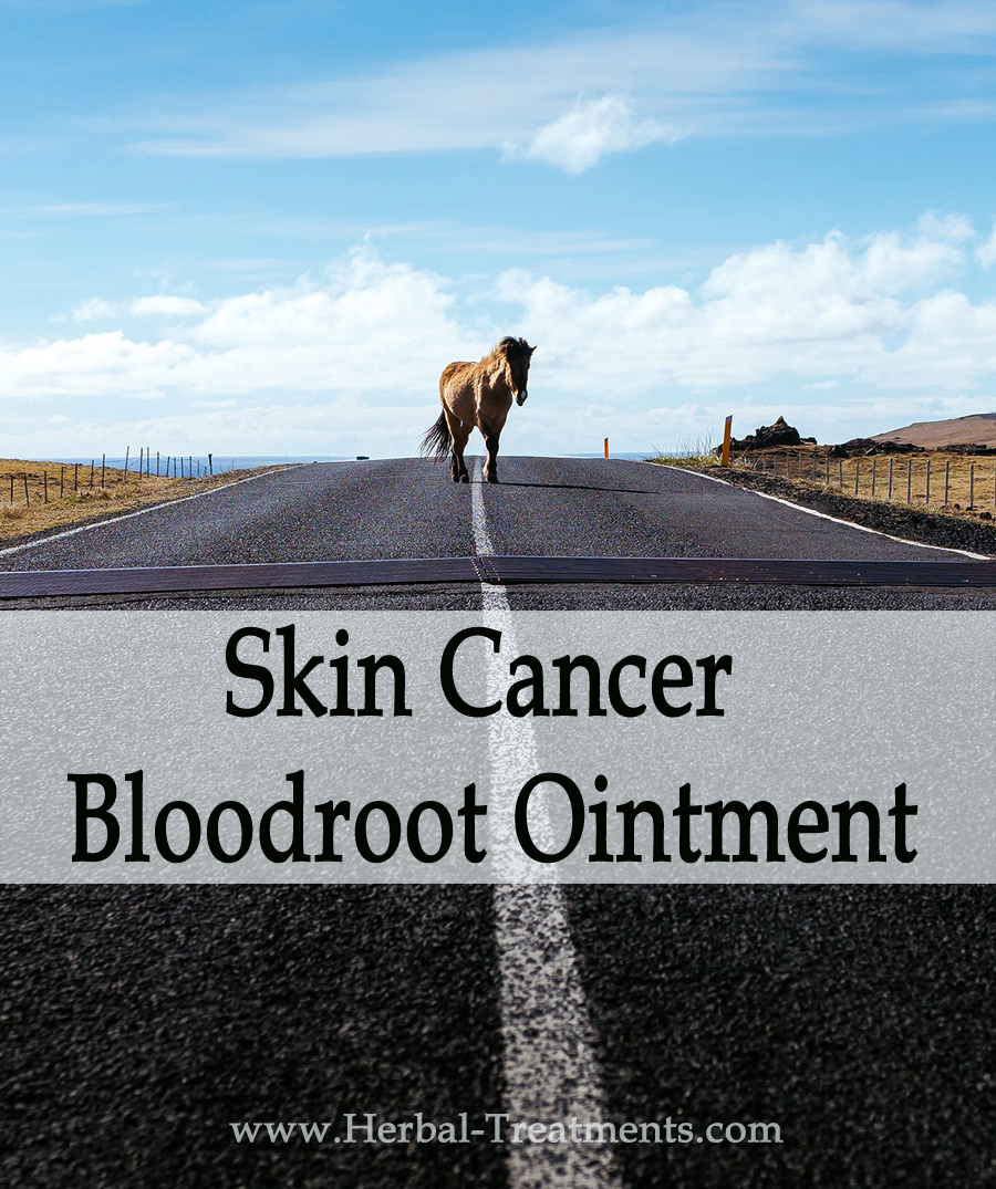 Herbal Treatment of Skin Cancer - Bloodroot Ointment for Horses