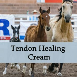 Herbal Treatment - Tendon Healing Cream for Horses