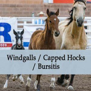 Herbal Treatment for Windgalls / Capped hocks / Bursitis in Horses