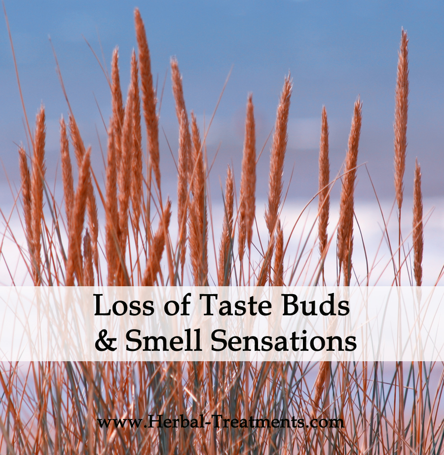 Herbal medicine for loss of taste buds and smell