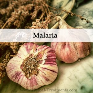 Herbal Medicine for Malaria