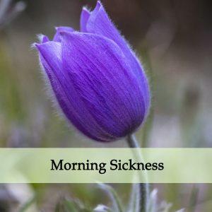 Herbal Medicine for Morning Sickness