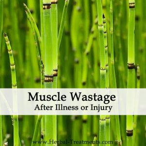 Herbal Medicine for Muscle Wastage Following Illness or Injury