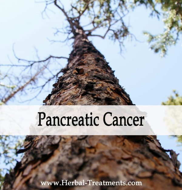 Herbal Medicine for Pancreatic Cancer Recovery & Prevention