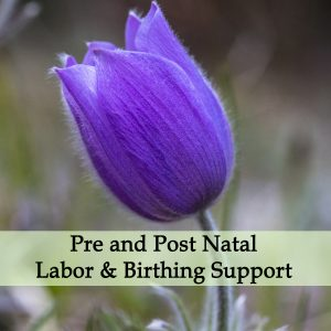 Herbal Medicine for Pre and Post Natal, Labor & Birthing Support