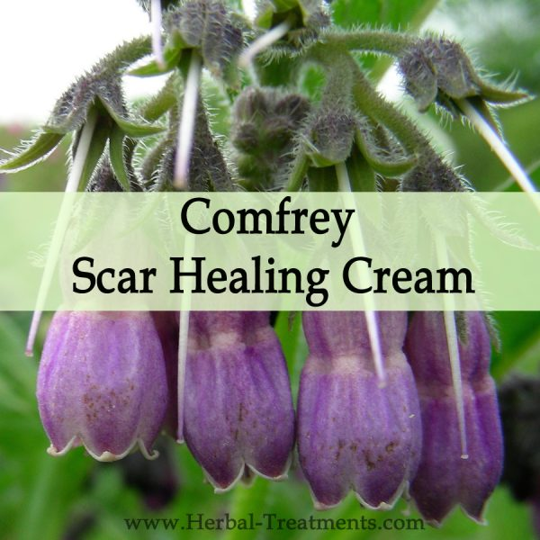 Herbal Medicine - Comfrey Scar Healing Cream