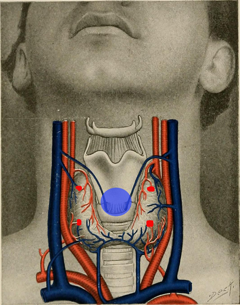 Breathe into the area of the throat where the thyroid is.