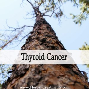 Herbal Medicine for Thyroid Cancer Recovery & Prevention