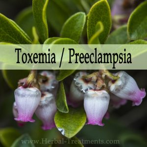 Herbal Medicine for Toxemia or Preeclampsia (Kidney Weakness During Pregnancy)