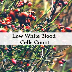Herbal Medicine for Low White Blood Cells Count