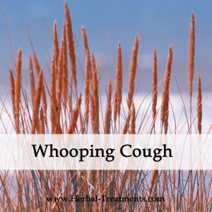 Herbal Medicine for Whooping Cough